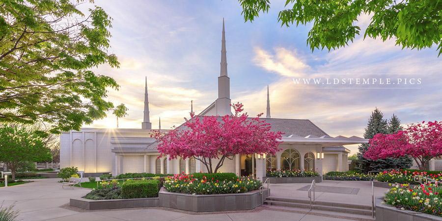 Boise Temple Spring Blossoms Print