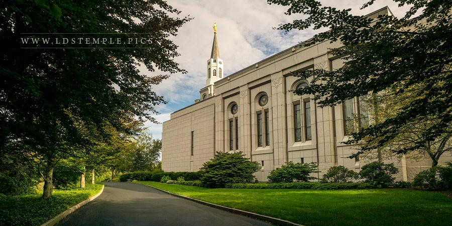 Boston Temple Trees of Life Print