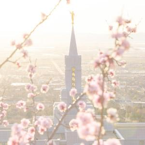 bountiful-temple-spring-blossoms
