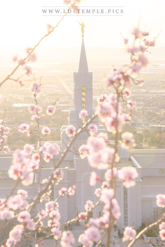 Bountiful Temple Spring Blossoms Print
