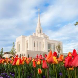 ogden-temple-spring-tulips