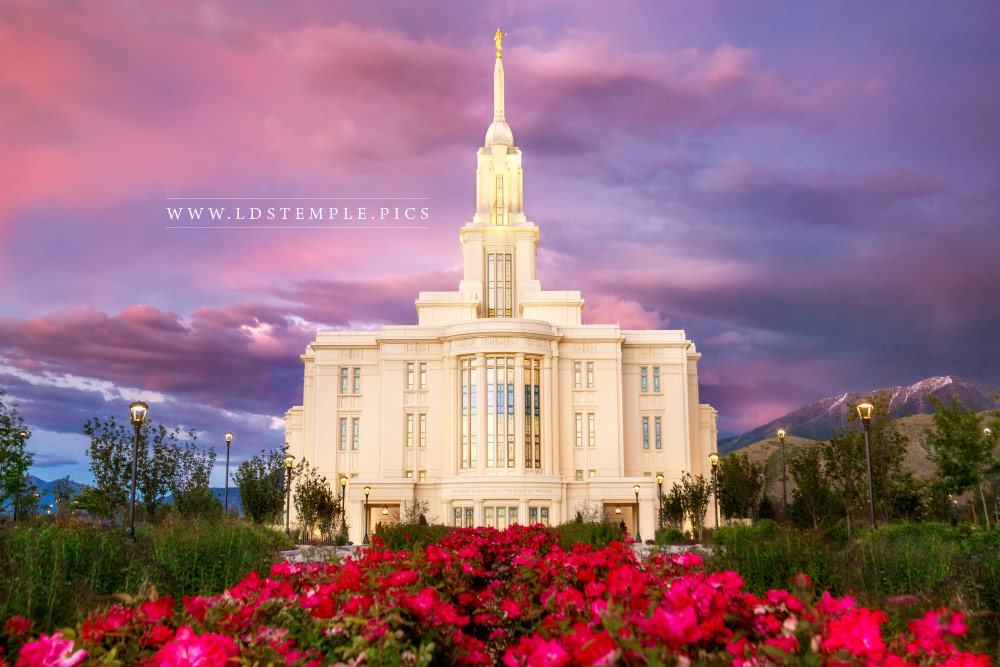Payson Temple Summer Roses Sunset Print