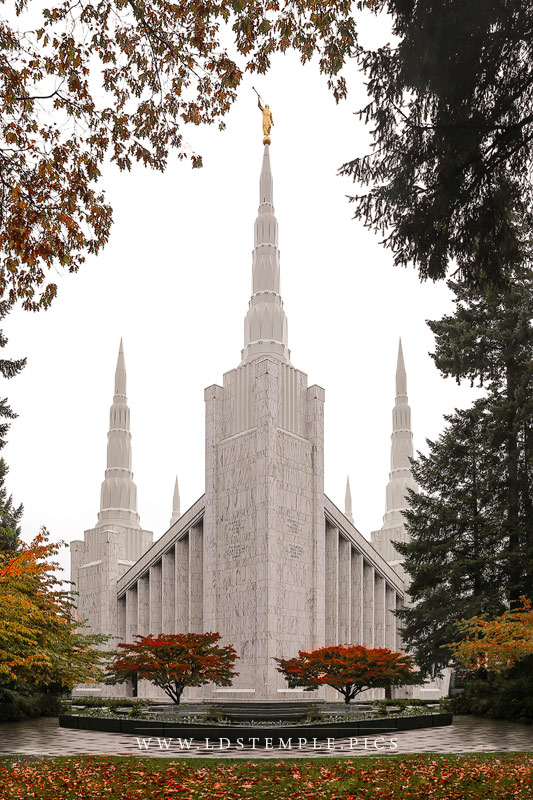 Portland Temple Fall Leaves Print