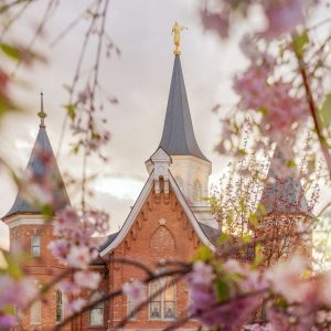 provo-city-center-temple-spring-blossoms