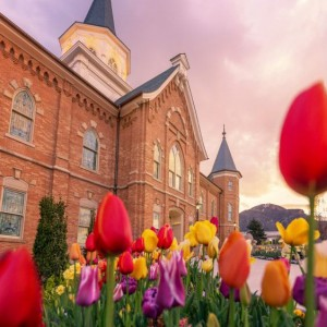 provo-city-center-temple-tulips