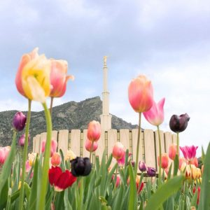 provo-temple-spring-tulips
