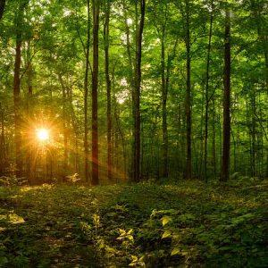 sacred-grove-sacred-morning