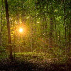sacred-grove-suddenly-a-light-descended