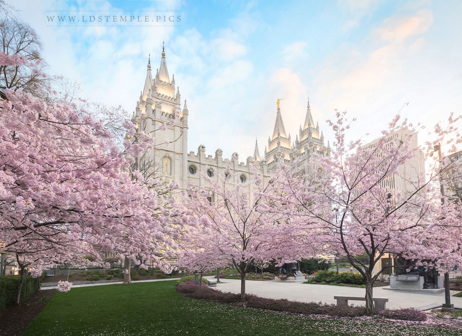 Salt Lake Temple April Blossoms Print