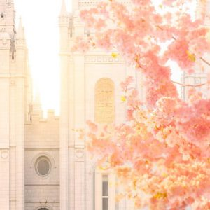 salt-lake-temple-blossom-glow