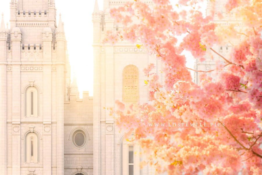 Salt Lake Temple Blossom Glow Print