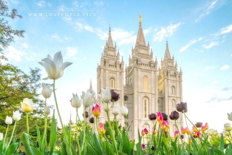 Salt Lake Temple Colors of Spring Print
