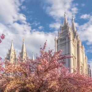 salt-lake-temple-spring-blossoms