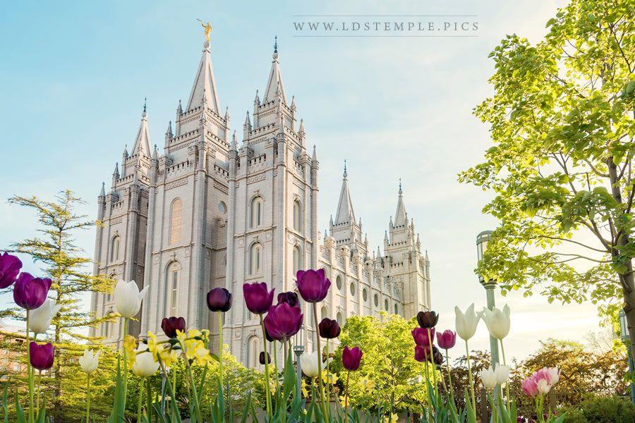 Salt Lake Temple Spring Flowers Print
