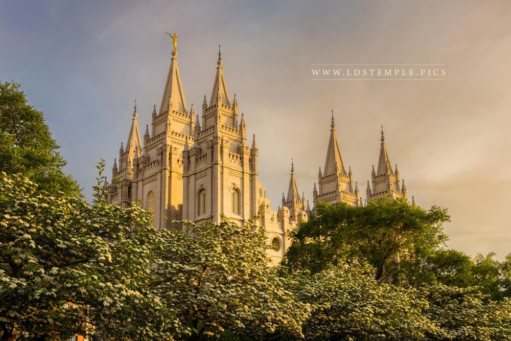 Salt Lake Temple Spring Sunset Lds Temple Pictures