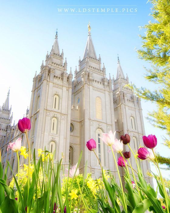 Salt Lake Temple Spring Tulips Print