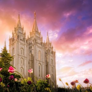 salt-lake-temple-tulips-sunset