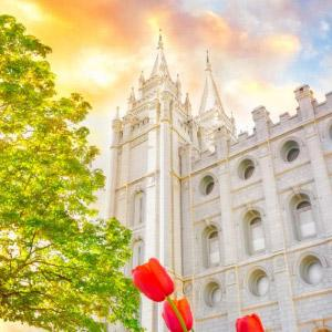 salt-lake-temple-tulips-sunset-west