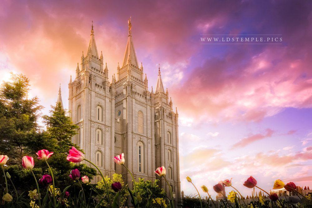 Salt Lake Temple Tulips Sunset Print