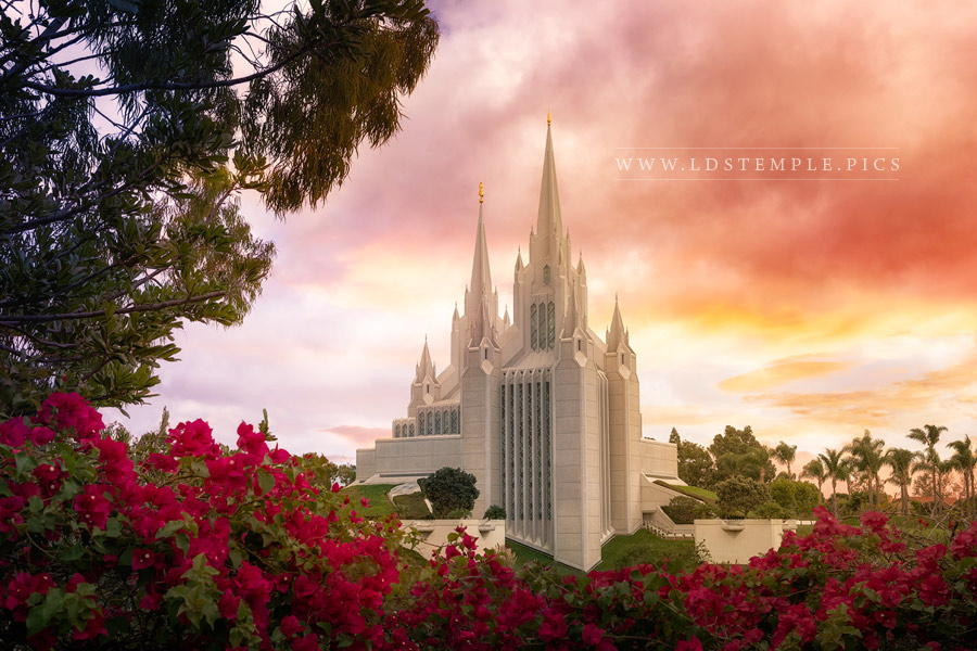 San diego temple sunrise and flowers lds temple pictures san diego temple sunrise and flowers solutioingenieria Gallery